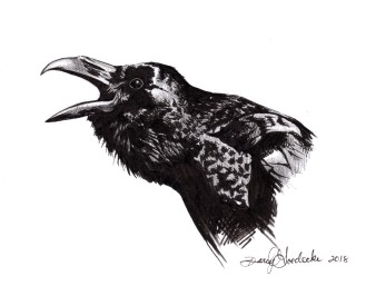 Caw - Raven Illustration by Darcy Goedecke